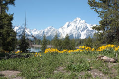 grand tetons Obraz Royalty Free