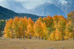 Grand Tetons in Fall Stock Photos