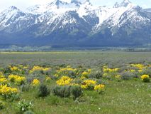 Grand Tetons in June Royalty Free Stock Photos