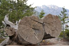 Fallen trees in Grand Teton National Park often appear as works of art for a photographer stock photo