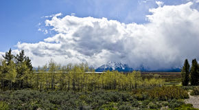 Grand Tetons Panorama Royalty Free Stock Images