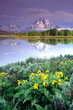 Grand Tetons Portraits Stock Photo