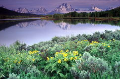 Grand Tetons Portraits Royalty Free Stock Images