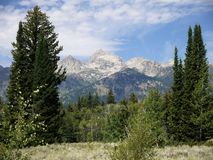 Grand Tetons. The Grand Tetons are set off by ponderosas royalty free stock images