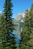 Grand Tetons, vertical. Grand Tetons, Wyoming; Jenny Lake Royalty Free Stock Images