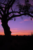 Grand Tree at Sunset Royalty Free Stock Photos