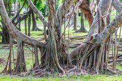 Grand tronc d'arbre pendant l'après-midi ensoleillé Images libres de droits