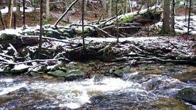 Grand tronc tombé du sapin, sapin dans les bois, rivière de montagne, courant, crique avec la rapide en automne en retard, hiver  banque de vidéos
