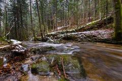 Grand tronc tombé du sapin, sapin dans les bois, rivière de montagne, courant, crique avec la rapide en automne en retard, hiver  Photo libre de droits