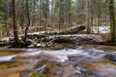 Grand tronc tombé du sapin, sapin dans les bois, rivière de montagne, courant, crique avec la rapide en automne en retard, hiver  Image stock