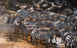 Grand troupeau de zèbres se tenant devant la rivière kenya tanzania Stationnement national serengeti Maasai Mara Images stock