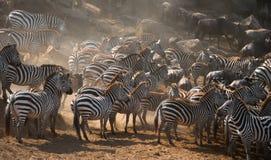 Grand troupeau de zèbres se tenant devant la rivière kenya tanzania Stationnement national serengeti Maasai Mara Image stock