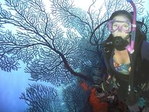 Free Grand Turk Scuba Diver W/ Sea Fan Royalty Free Stock Images - 169635289