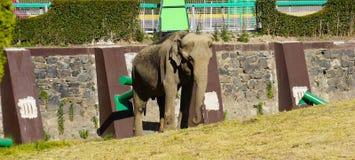 Grand vieil éléphant au zoo Photo libre de droits
