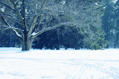 Grand vieil arbre Photographie stock