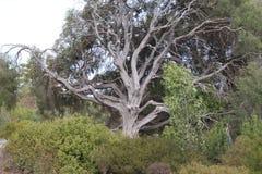 Grand vieil arbre Photographie stock libre de droits