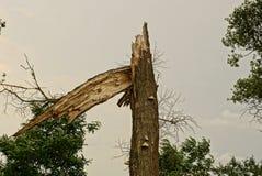 Grand vieil arbre cassé en parc sur le fond de ciel Photo libre de droits