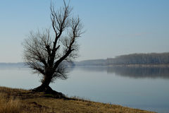 Grand vieil arbre de rive Photographie stock