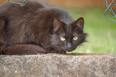 Grand vieux chat Photos stock