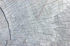 Grand vieux modèle horizontal texturisé âgé détaillé superficiel par les agents naturel de l'espace de copie de fond de Grey Tree Photographie stock libre de droits