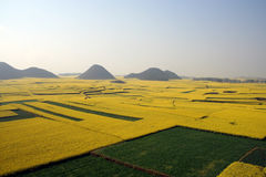 Grand view of rape fields with hills. At leping of yunnan in china,  the grand view of rape(cole) flowers field with small hills Stock Images