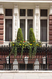 Grand window. A windowbox outside a grand and ornate window Royalty Free Stock Image