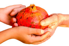 Granddaughter giving her Grandmother Pomegranate. Granddaughter is giving her Grandmother Pomegranate stock images