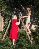 Granddaughter and grandchild harvesting cherry Stock Photo