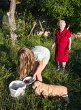 Granddaughter and grandchild harvesting cherry Royalty Free Stock Images
