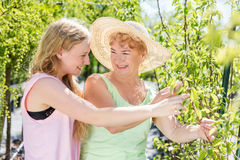 Granddaughter and grandmother spending time in a summer garden. Royalty Free Stock Photos