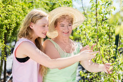 Granddaughter and grandmother spending time in a summer garden. Stock Photo