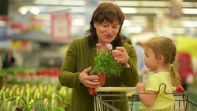 Granddaughter Helps Grandmother to Choose Flowers. The Flowers Smells Very Good. Flowers, Colourful, Fun, Family stock footage