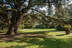 Grande-árbol Imagenes de archivo