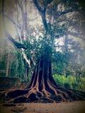 Grande grande, árvore fotografia de stock