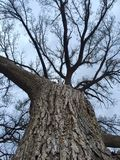 Grande árvore Foto de Stock
