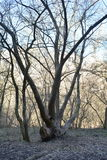 Grande árvore Imagem de Stock Royalty Free