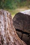 Grande árvore cortada ao meio Fotografia de Stock
