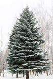 Grande, árvore de abeto alta, verde bonita toda na neve na rua no inverno imagem de stock