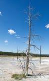 Grande árvore ereta inoperante em Hot Springs Imagem de Stock Royalty Free
