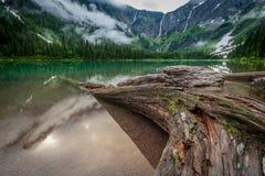 A grande árvore estende no lago avalanche imagem de stock royalty free