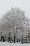 Grande árvore nevado o chuvisco coberto olha muito agradável Imagem de Stock