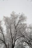 Grande árvore nevado o chuvisco coberto olha muito agradável Imagens de Stock Royalty Free