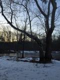 Grande árvore por uma lagoa pequena no por do sol Imagens de Stock