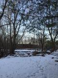 Grande árvore por uma lagoa pequena no por do sol Fotos de Stock