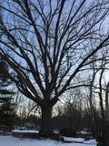Grande árvore por uma lagoa pequena no por do sol Imagem de Stock Royalty Free