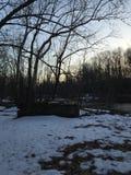 Grande árvore por uma lagoa pequena no por do sol Fotografia de Stock Royalty Free