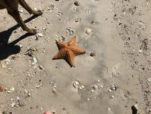 grande étoile de mer orange et x28 ; starfish& x29 ; sur le sable image stock