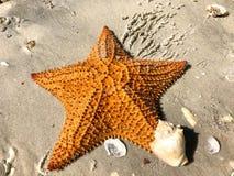 grande étoile de mer orange et x28 ; starfish& x29 ; sur le sable photographie stock