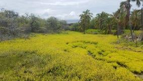 Grande île Images libres de droits