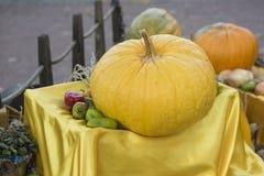 grande abóbora amarela Fotografia de Stock